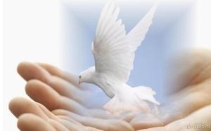 merpati perdamaian