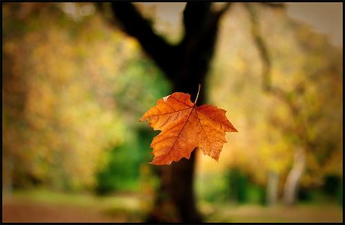 daun gugur
