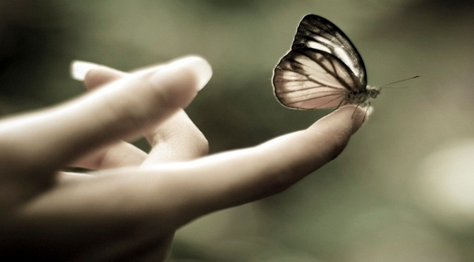 Kupu-kupu Kertas