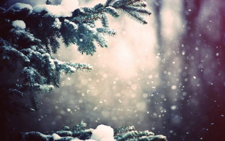 awal musim dingin